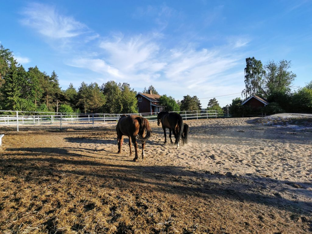 Hiekkatarha ja hevoset